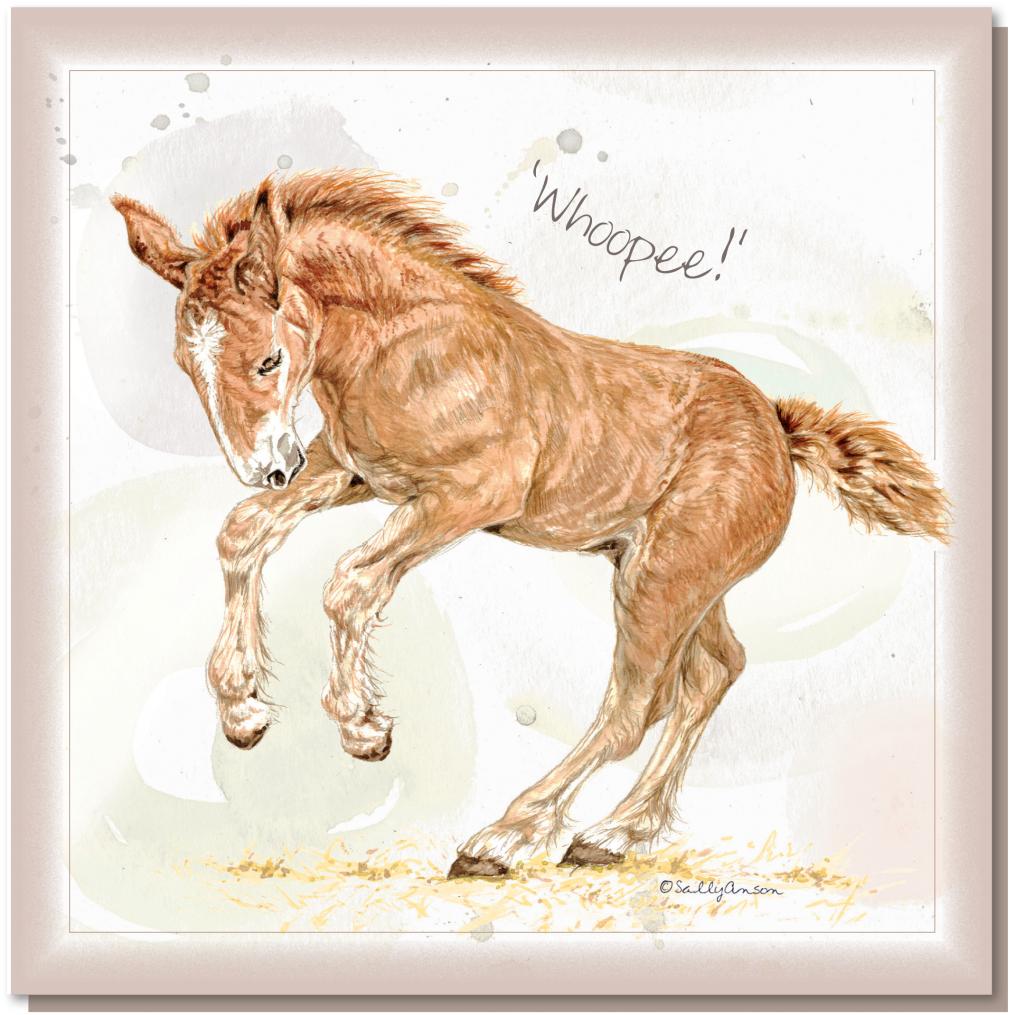 SEC047 Suffolk Punch Foal