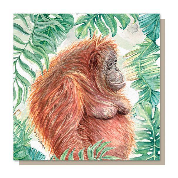 SJB023 - Orangutan