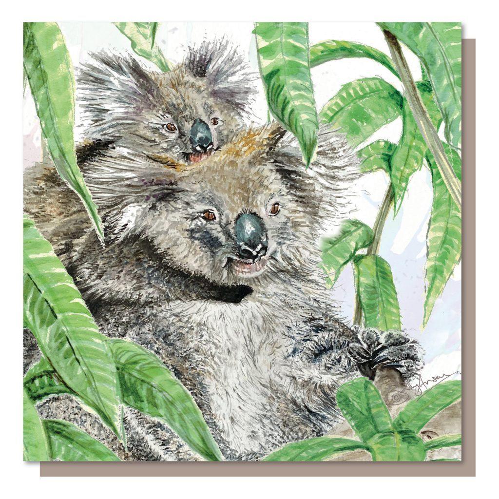 SJB039-koalas