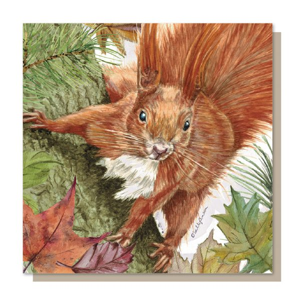 SJB013 - Squirrel